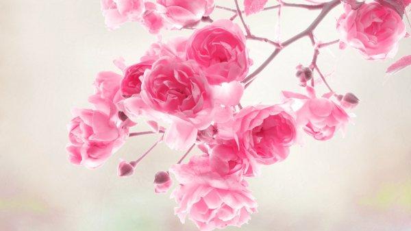 Романтичные обои на День Валентина, но не только