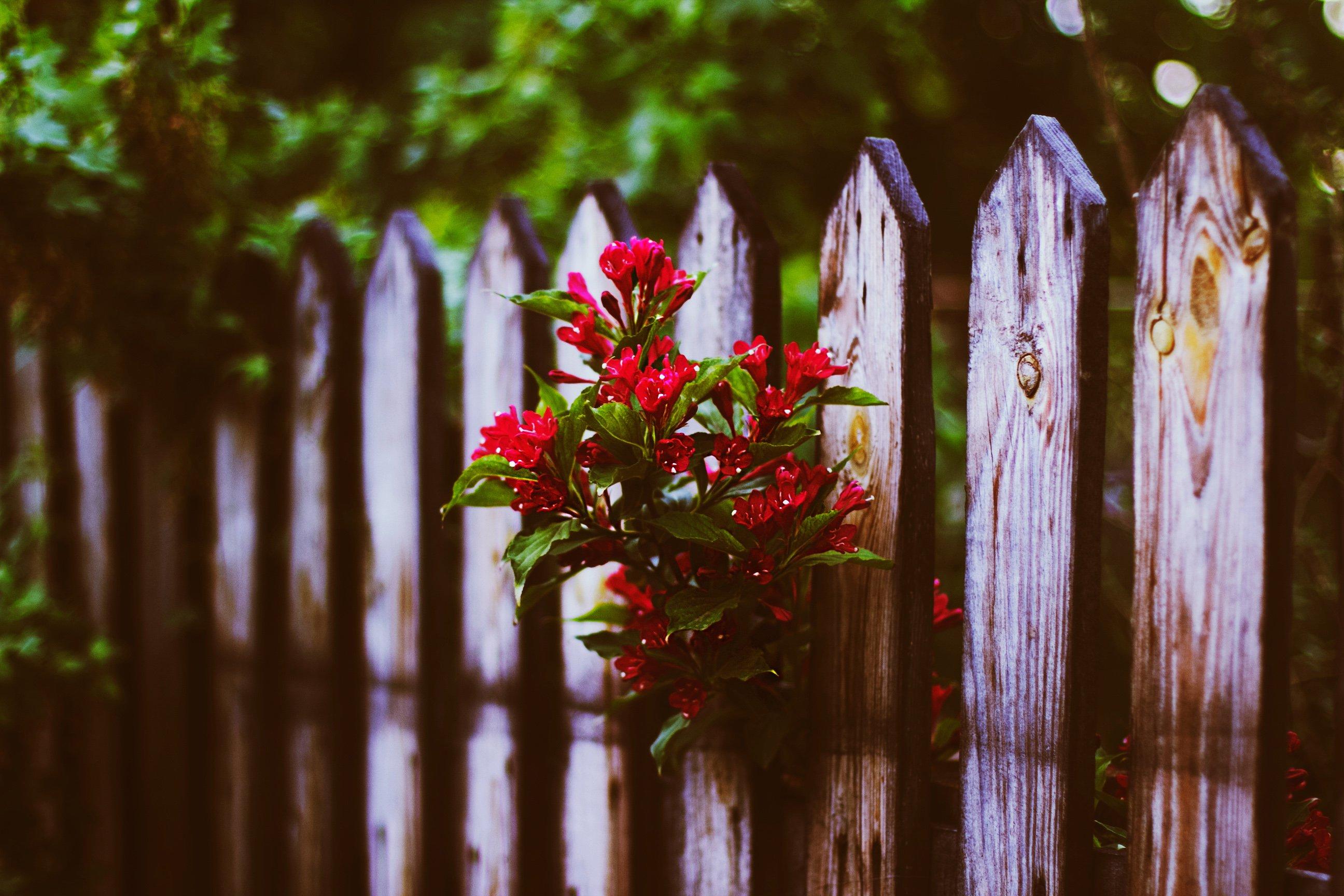 Забор цветы  № 2488833 бесплатно