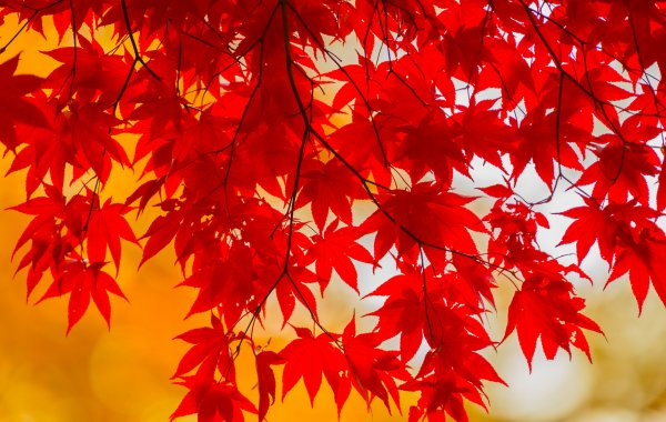 Осенние обои с летними воспоминаниями