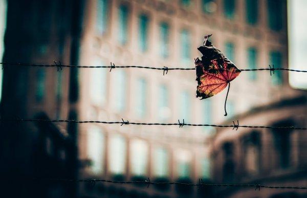 Осенняя романтика в новейших обоях