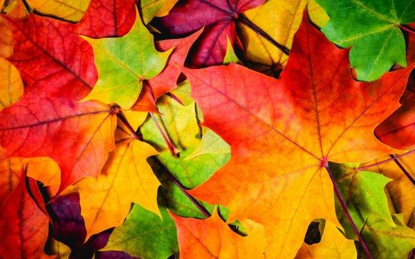 Яркие краски осени в лучших обоях за неделю